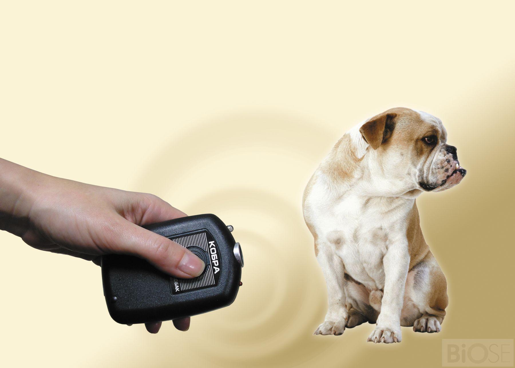 Электронные отпугиватели от собак фото отпугиватель домашних птиц